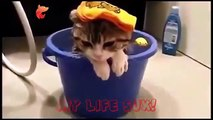 funnycats _ funny cats videos _ funny cats and dogs _ funny cats _ funny cat fac