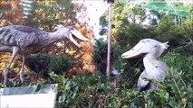 Non, ces 2 oiseaux ne sont pas des statues - Becs en sabot du Nil immobiles