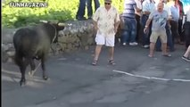 Funny videos 2017 _ Stupid people doing stupid things - Bull Fighting - Bull Fails accident