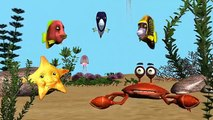 Funny Happy Birthday Song. Fish sing Happy Birthday