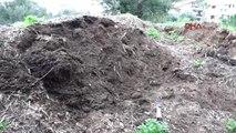 Muğla Marmaris Belediyesi'nden Bitki ve Fidanlara Can Veren Çalışma