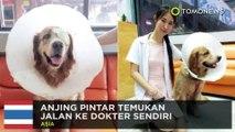 Anjing pintar: anjing lawan ular piton demi lindungi kucing - TomoNews