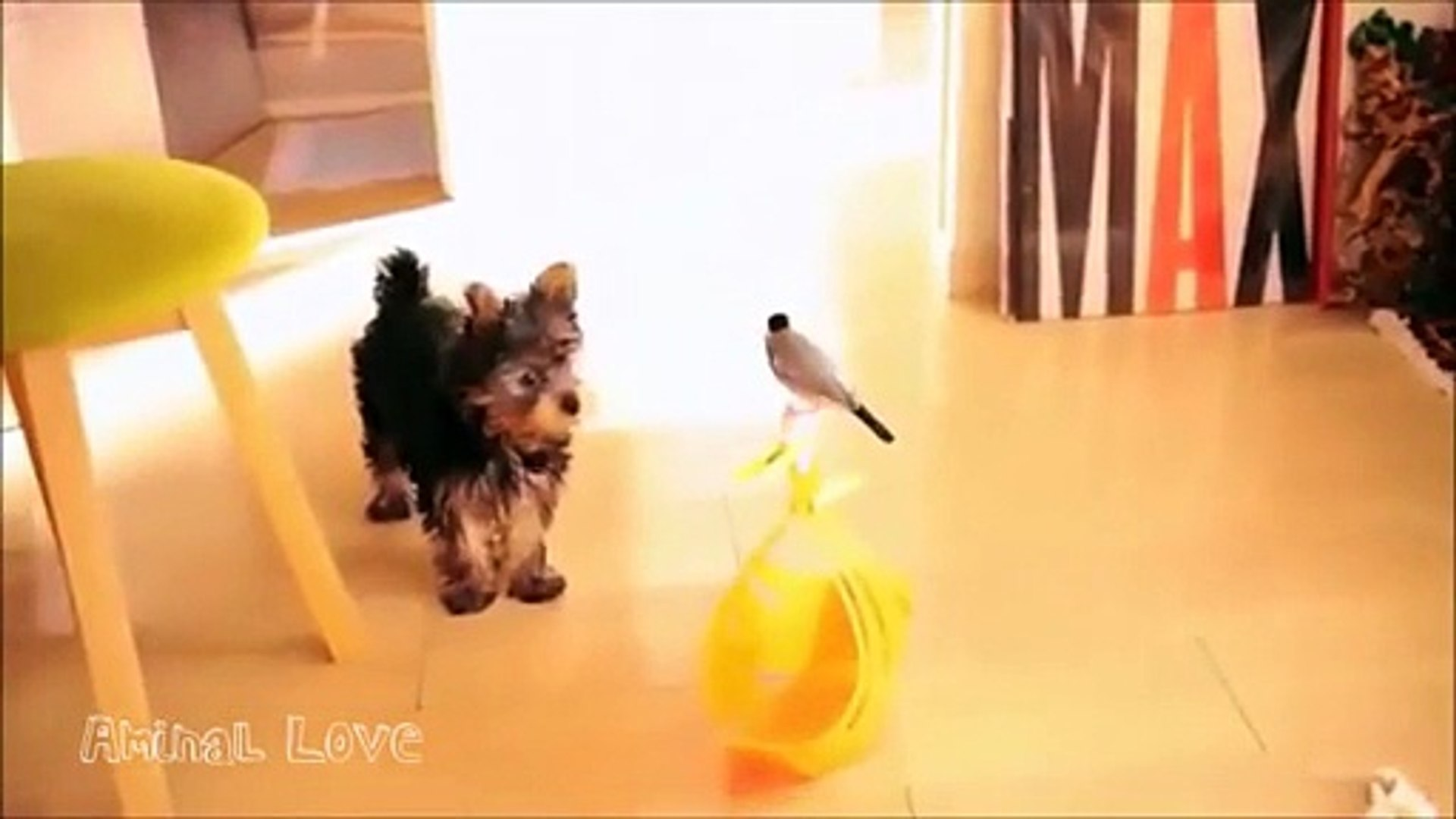 Yorkshire Terrier Makes A New Friend With A Bird  , Tv series MOVİES 2018 Comedy actions cinema