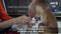 Puppy receives prosthetic paws after attack