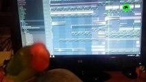 PARROTS GOING CRAZY - Funny Parrots Compilation