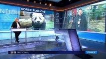 Yuan Meng : des retombées économiques importantes pour le zoo de Beauval