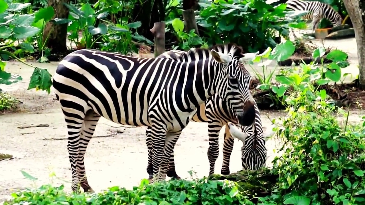 African Animals Names and Sounds for Kids to Learn | Learning African Animal Names for Children