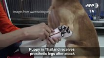 Puppy receives prosthetic paws after a