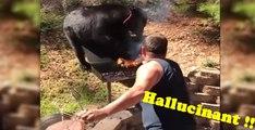 Un père de famille se bat contre un ours affamé  qui essaie de chaparder son barbecue ! Hallucinant !