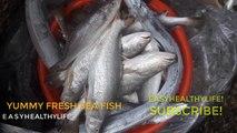 Amazing Fresh Sea fish Fresh Squid  Kinds of Fresh Sea Fish Dungeness crab Fresh Sea Prawn