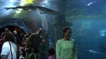 Open d'Australie 2018 - Maria à l'aquarium avant de jouer Maria Sharapova à Melbourne