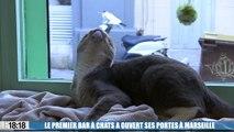 Le premier bar à chats vient d'ouvrir ses portes à Marseille