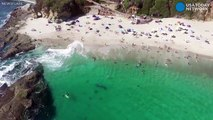Whale swims eerily close to seemingly unaware swimmers
