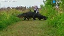 Quand tu croises un crocodile qui ressemble plus à un dinosaure qu'à un simple crocodile