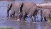 elephants crossing Crocodile River , South Africa