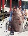 Ces pecheurs ont capturé un mérou géant... Regardez la taille du poisson