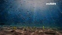 Zig & Sharko ITA - 2°stagione ep 21 (3) - miss spiaggia - (st 2 ep 22 di 26)