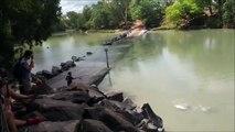 Un crocodile vient voler la prise d'un pecheur... Fainéant mais intelligent l'animal