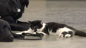 This Cat Named D-O-G Helps Train Pups To Be Service Dogs