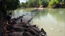Un crocodile vient voler la prise dun pecheur... Fainéant mais intelligent !