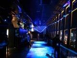 [Nyûsu Show] Tokyo Tower - City Light Fantasia