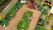 Jardin - Dans mon jardin d'hiver