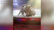 Un cheval se fait attaquer par un tigre et un lion dans un cirque chinois