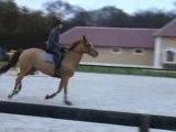 Cheval Olmifon saut maison / horse Olmifon jump work at home