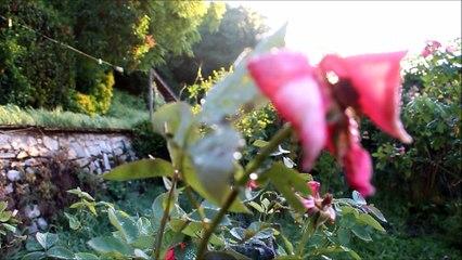 Savitri - Sri Aurobindo - L'aube symbolique - 2