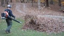 Devinez ce qui se cache sous ce tas de feuilles !