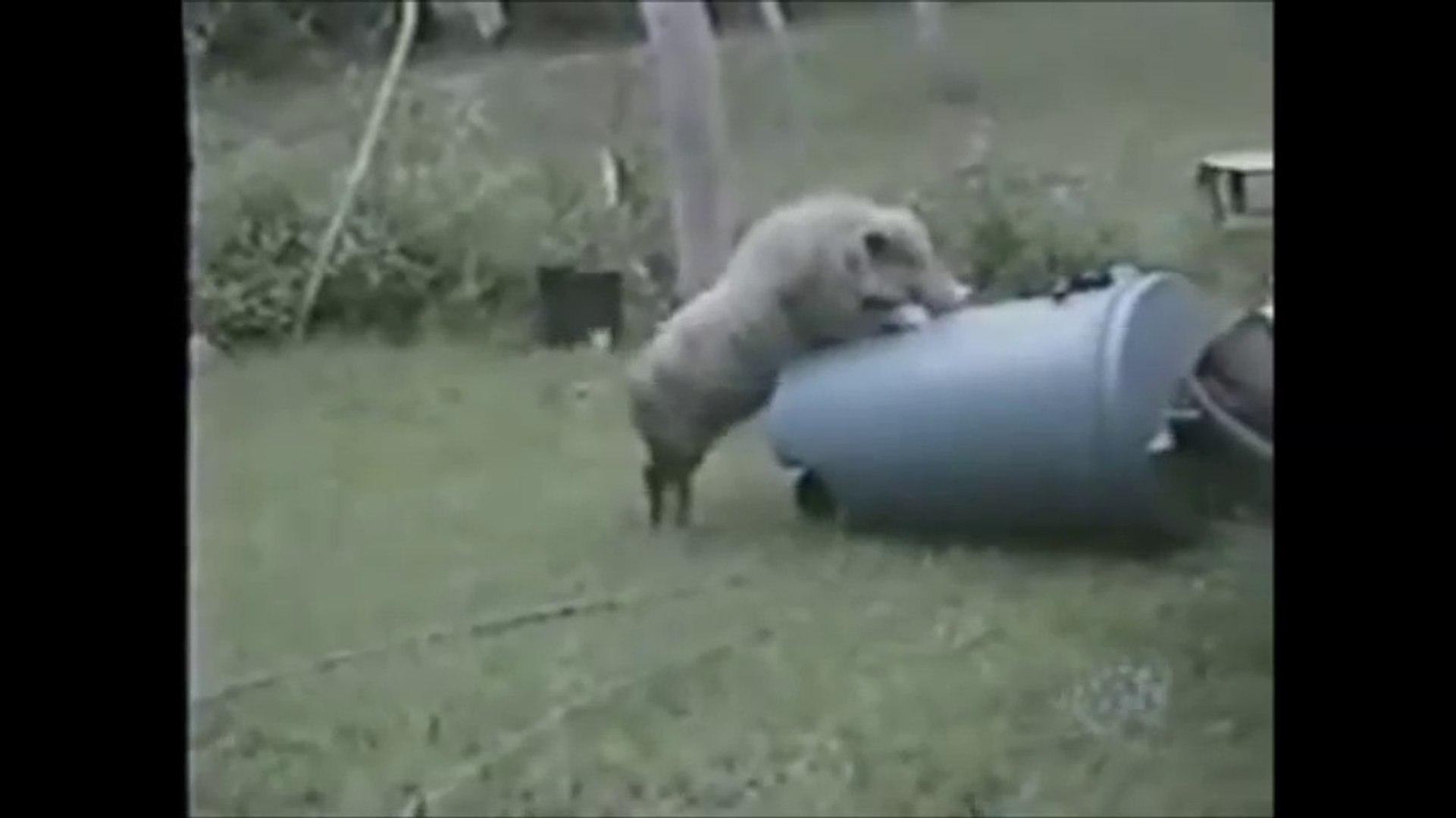 Silly Stupid Animals - Funny Animals Compilation