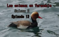 Les animaux en farandole: saison 2: épisode 13