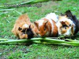 See Cute Baby Animal Videos, Super Funny Animals, Cutest Pets, Lovely Animals,