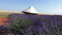 Alpes-de-Haute-Provence : les champs de lavandes attisent aussi la curiosité des extraterrestres, rappelez-vous il y a 53 ans un ovni se posait sur le plateau de Valensole