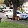 Un écureuil nargue un chien... Tellement drôle