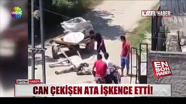 Adanada bir at sahibi, arabaya bağlı olan hayvanın yorgunluktan yere düşmesine sinirlenerek onu sopayla dövdü.