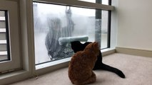 These Cats Love Window Cleaners - Kitties have an exception bond with the window cleaner