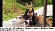 Stray Dog Thanks the Woman Who Feeds Him Every Day by Bringing Her Gifts