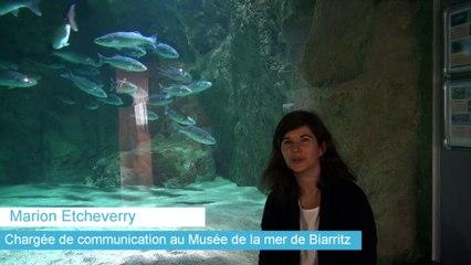 Une nouvelle tortue de 100 kg à l'Aquarium de Biarritz
