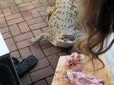 Pet Crocodile - Feeding time for Jilfia (my pet Salty)