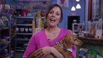How Do Pet Microchip Services Work? : Dog & Pet Care
