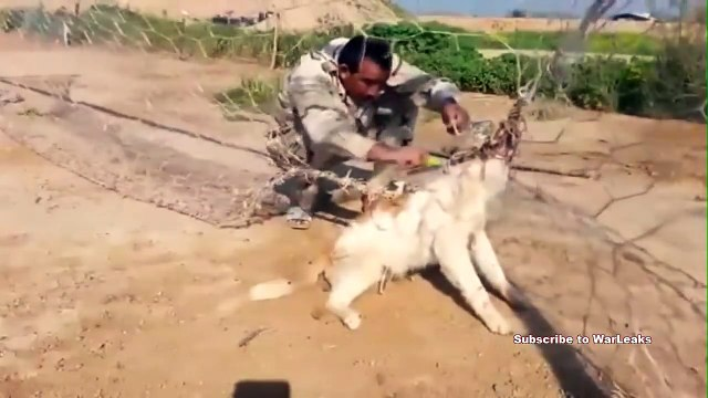 Soldier Rescues Dog - Iraqi Soldier Saves Entangled Puppy That Got Trapped In A Net | Dog Set Free