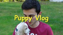NEW PUPPY - New Beagle Puppy (Funny Puppy & Cuteness)