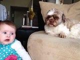 Quand ton chien a trouvé le truc pour faire arrêter bébé de pleurer!
