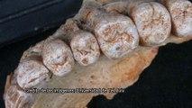 Arqueólogos hacen un hallazgo en Israel que obligará a cambiar la historia de la evolución humana