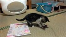 ネコ型ベッドと子猫のミルキー Kitten and Cat type bed