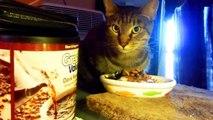Rocky -from 'Feral Cat' to 'Kitten-like' fussy eater