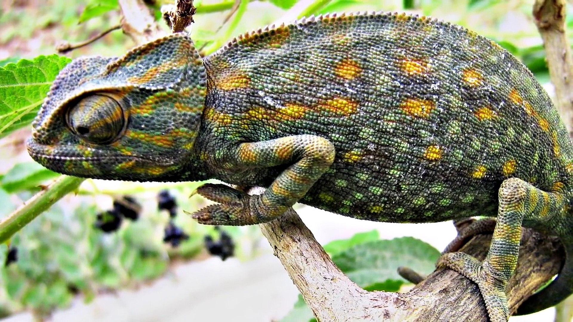 5 Animales Con Camuflajes Sorprendentes
