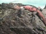 Galapagos Islands travel: Kathy's slides