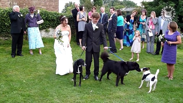 Wedding Pets   Funny Pets Video Compilation